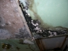 Mold picture- Ceiling Mold