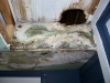 Mold picture- Mold In Attic
